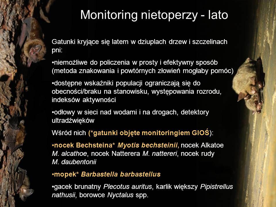 Monitoring nietoperzy - lato