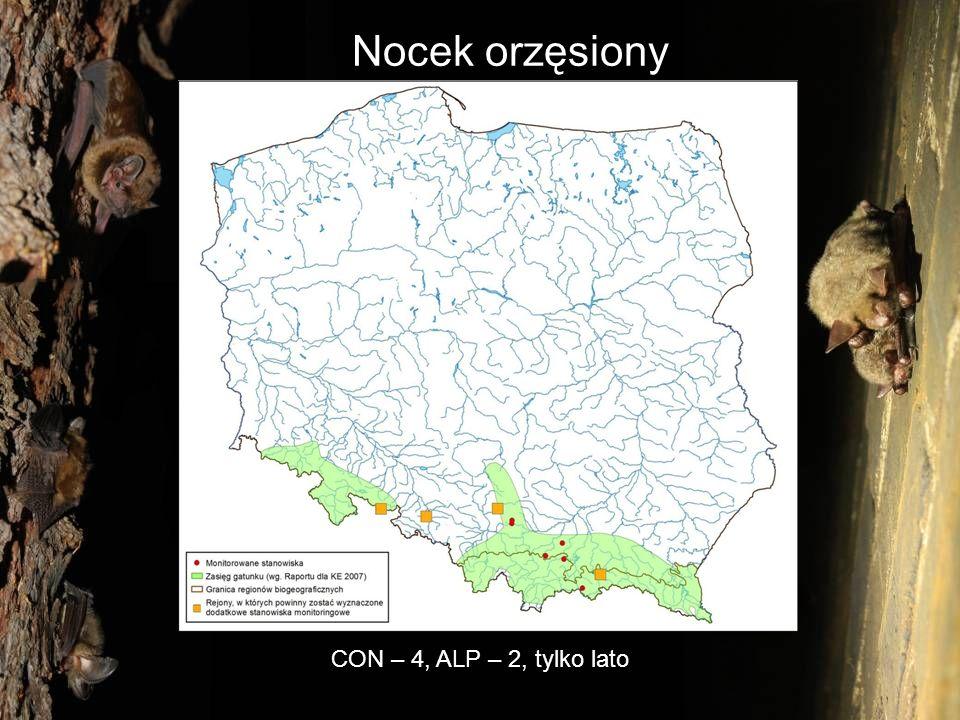 Nocek orzęsiony CON – 4, ALP – 2, tylko lato