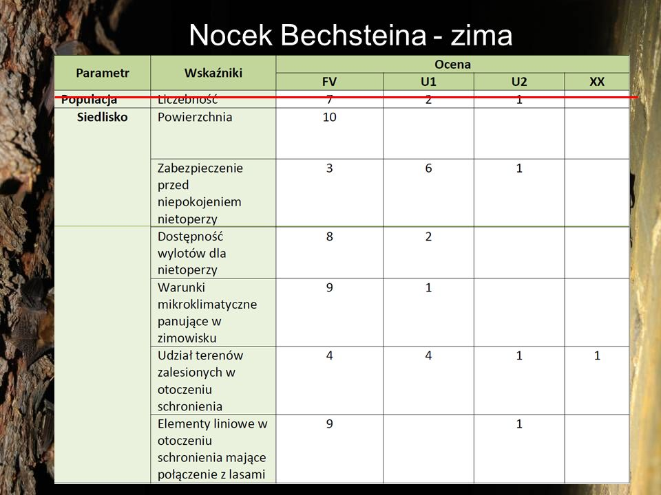 Nocek Bechsteina - zima