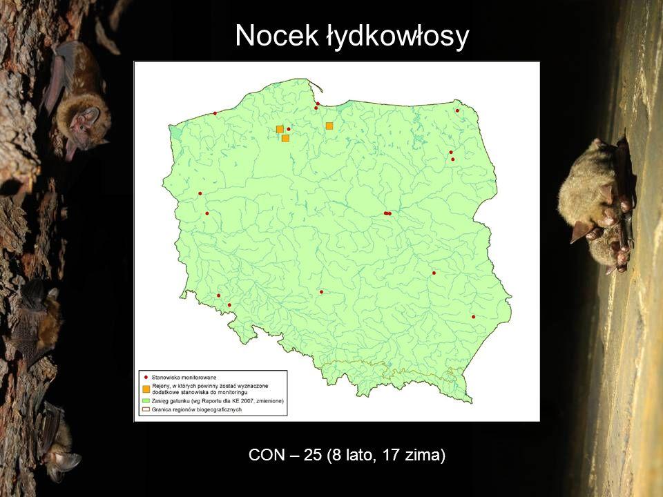 Nocek łydkowłosy CON – 25 (8 lato, 17 zima)