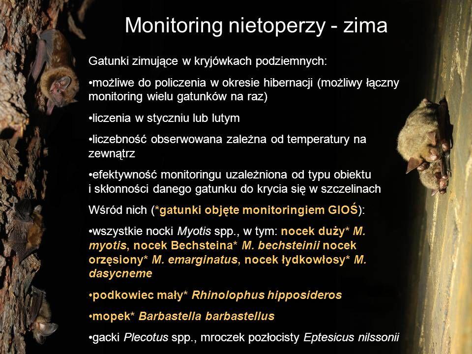 Monitoring nietoperzy - zima