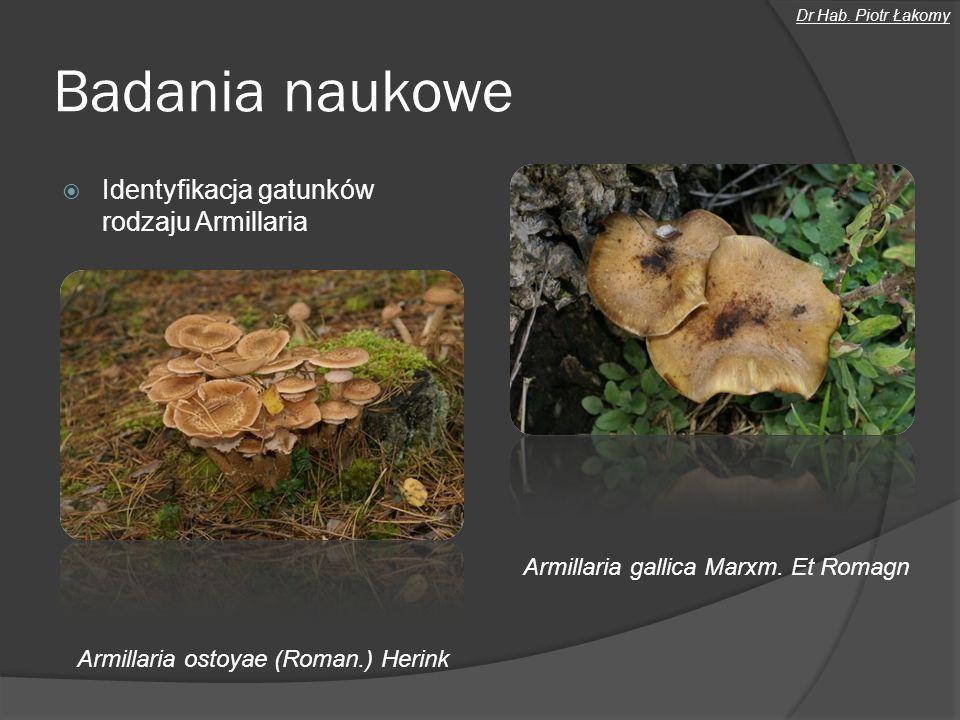 Badania naukowe Identyfikacja gatunków rodzaju Armillaria