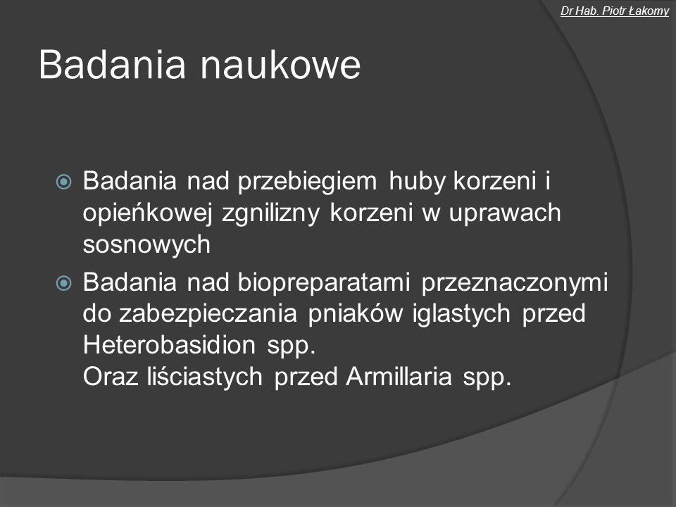 Dr Hab. Piotr Łakomy Badania naukowe. Badania nad przebiegiem huby korzeni i opieńkowej zgnilizny korzeni w uprawach sosnowych.