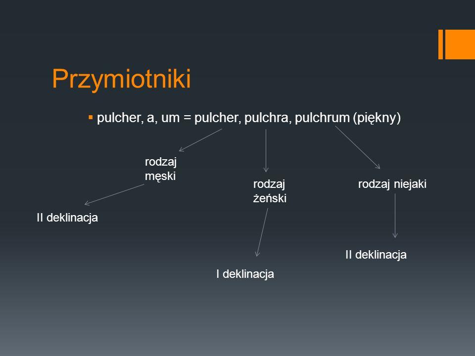 pulcher, a, um = pulcher, pulchra, pulchrum (piękny)