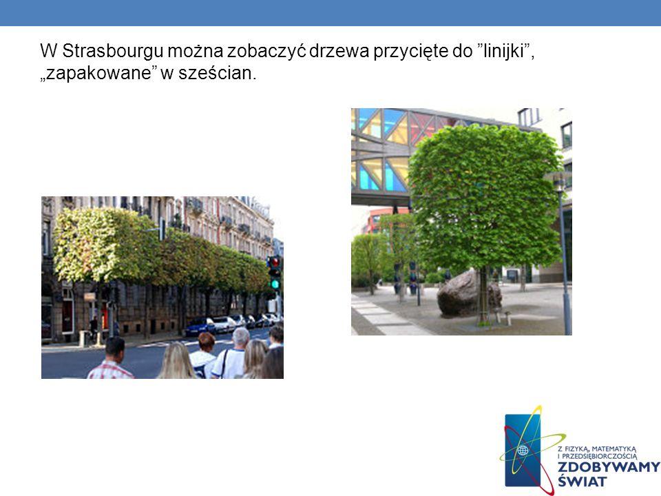 """W Strasbourgu można zobaczyć drzewa przycięte do linijki , """"zapakowane w sześcian."""