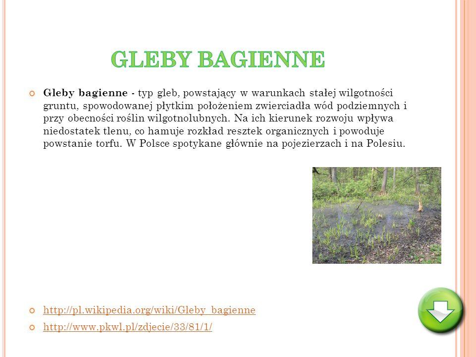 GLEBY BAGIENNE