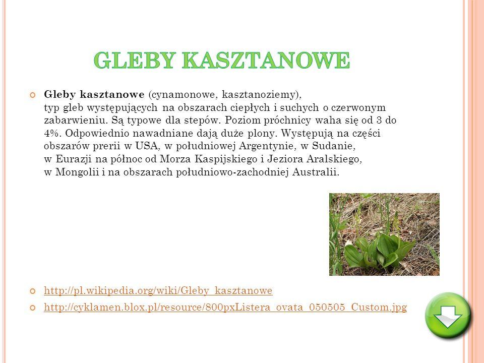 GLEBY KASZTANOWE