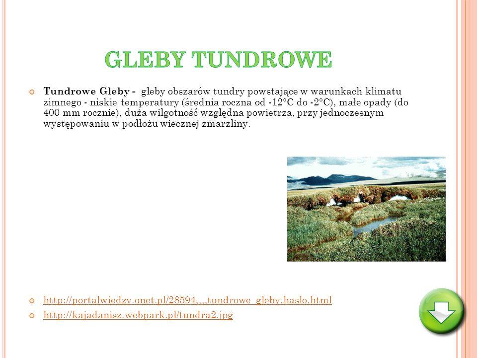 GLEBY TUNDROWE