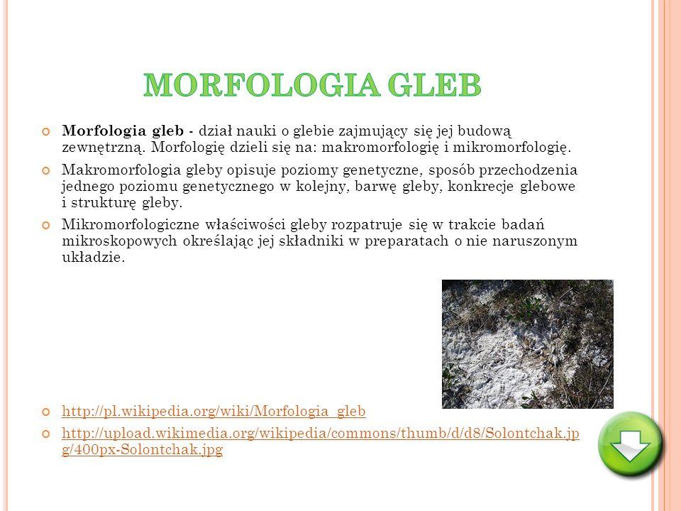 MORFOLOGIA GLEB