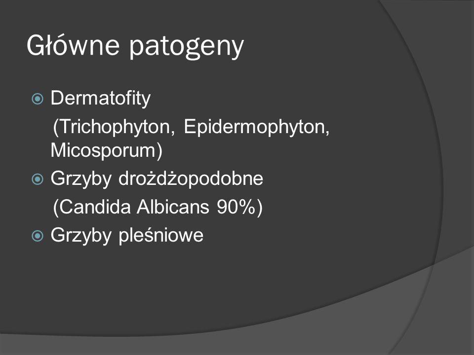 Główne patogeny Dermatofity (Trichophyton, Epidermophyton, Micosporum)