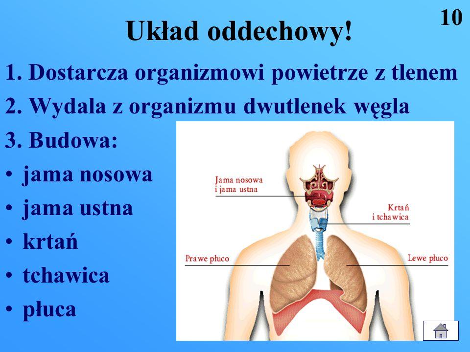 Układ oddechowy! 10 1. Dostarcza organizmowi powietrze z tlenem