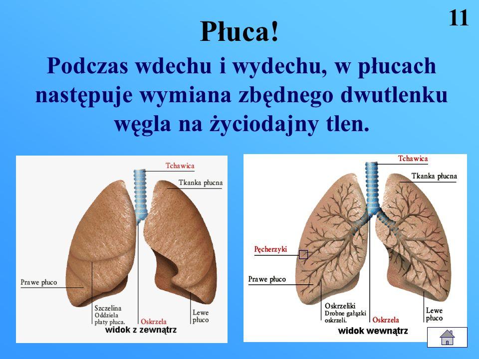 Płuca. 11.