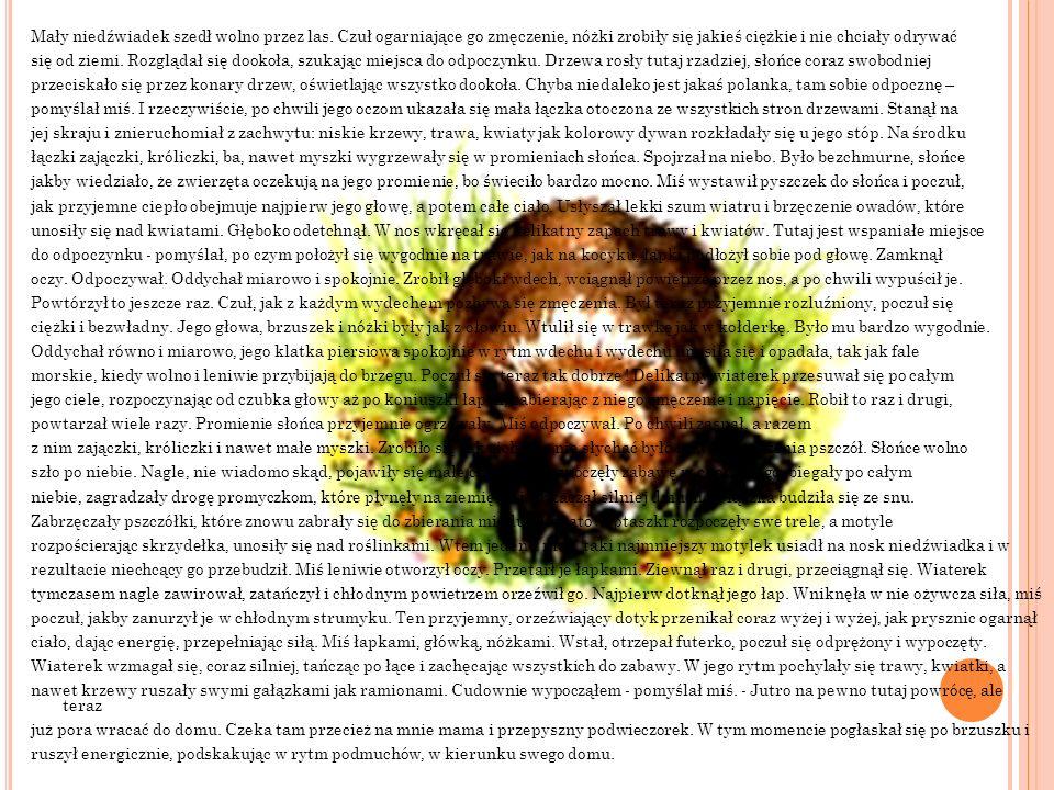 Mały niedźwiadek szedł wolno przez las