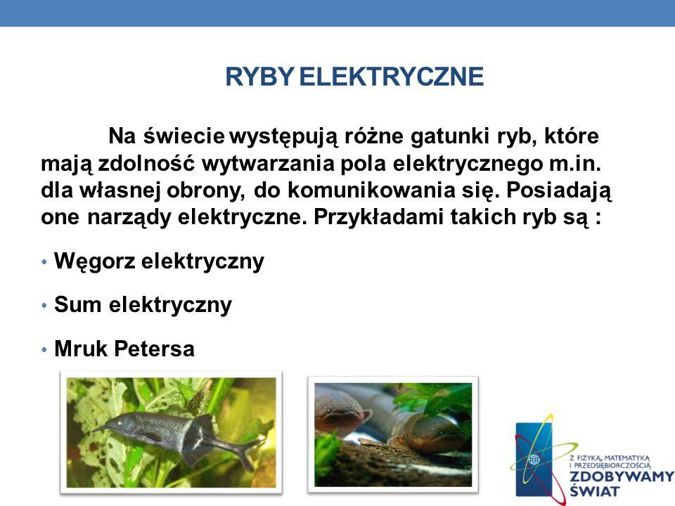 Ryby elektryczne