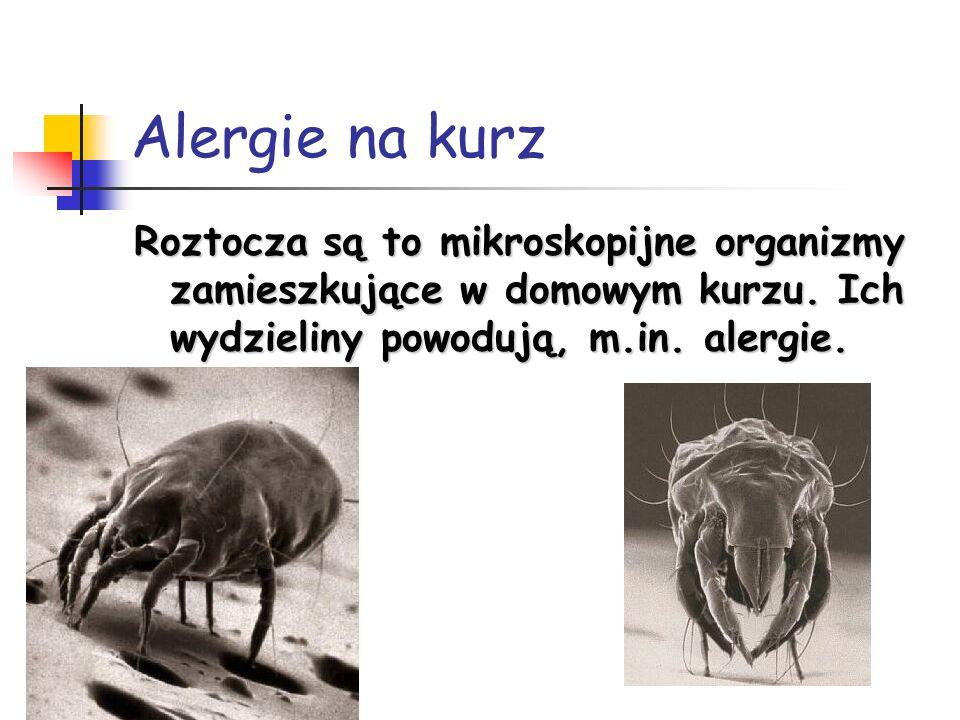 Alergie na kurzRoztocza są to mikroskopijne organizmy zamieszkujące w domowym kurzu.