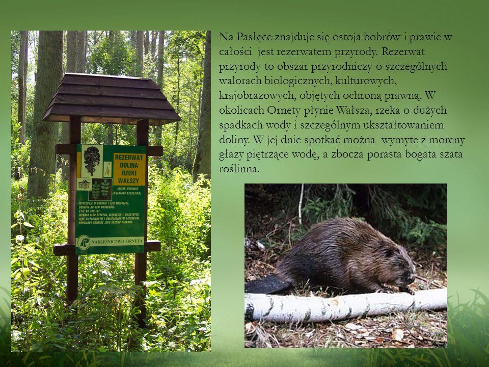 Na Pasłęce znajduje się ostoja bobrów i prawie w całości jest rezerwatem przyrody.