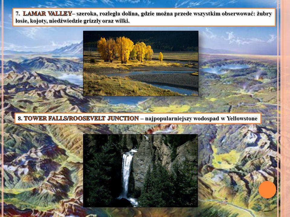 7. LAMAR VALLEY– szeroka, rozległa dolina, gdzie można przede wszystkim obserwować: żubry łosie, kojoty, niedźwiedzie grizzly oraz wilki.