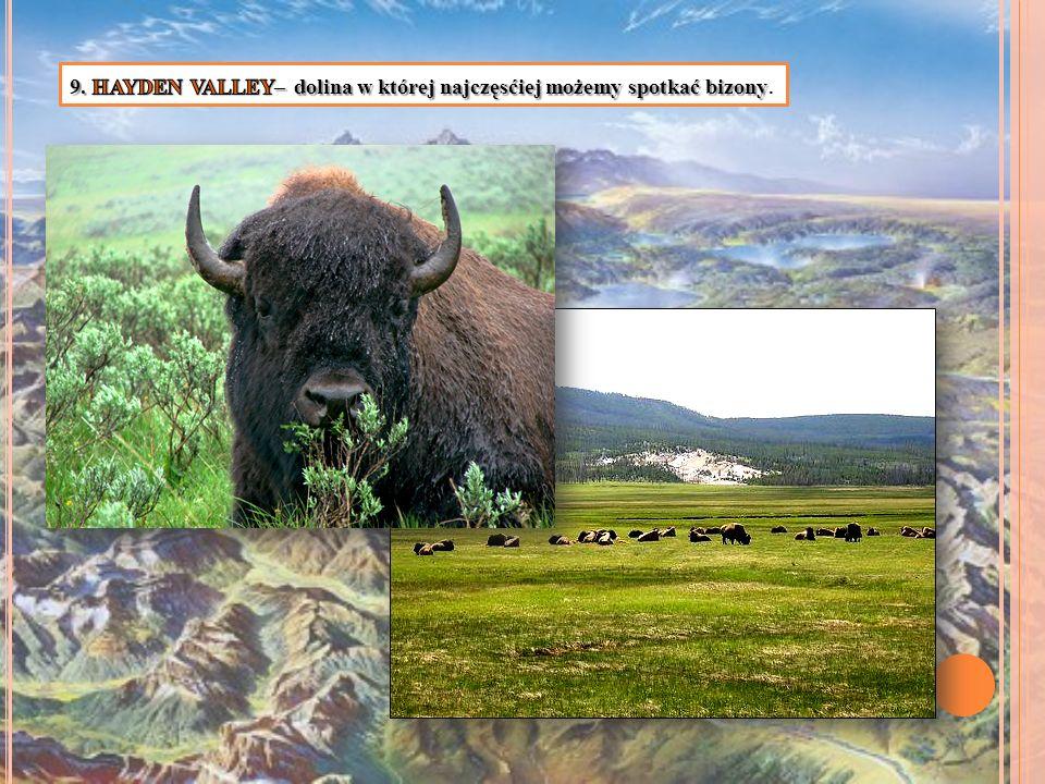 9. HAYDEN VALLEY– dolina w której najczęsćiej możemy spotkać bizony.