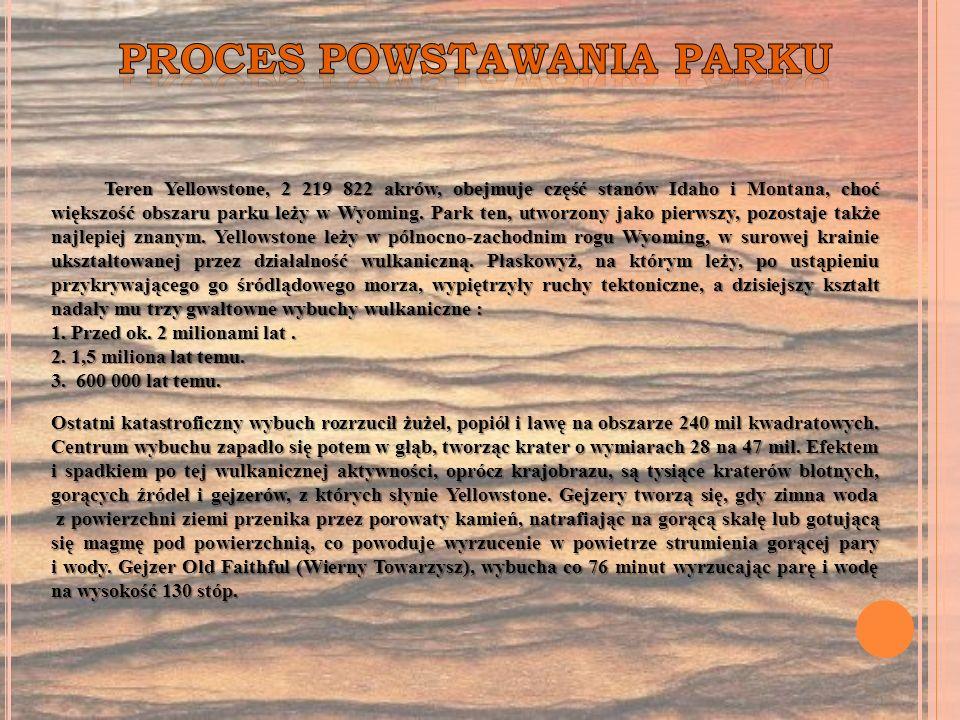 PROCES POWSTAWANIA PARKU