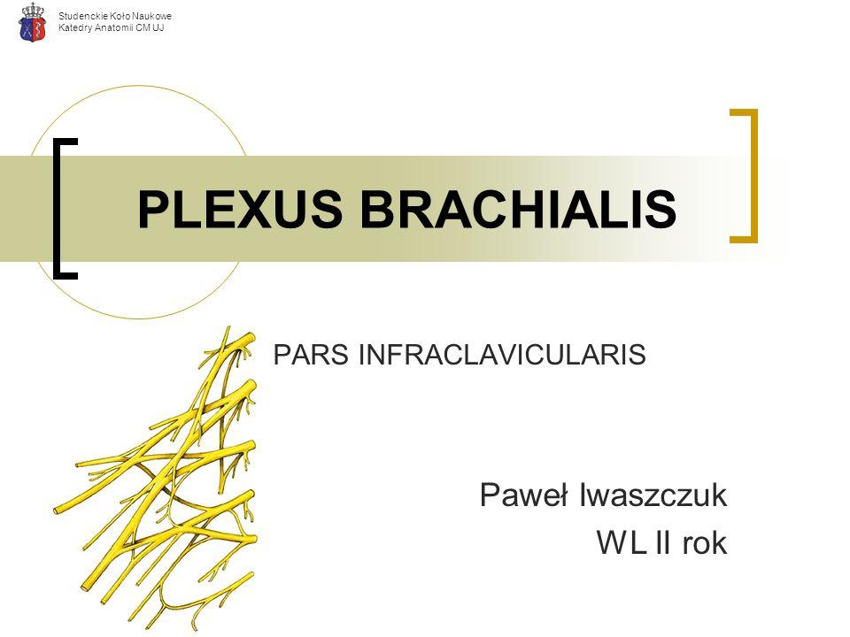 PARS INFRACLAVICULARIS Paweł Iwaszczuk WL II rok