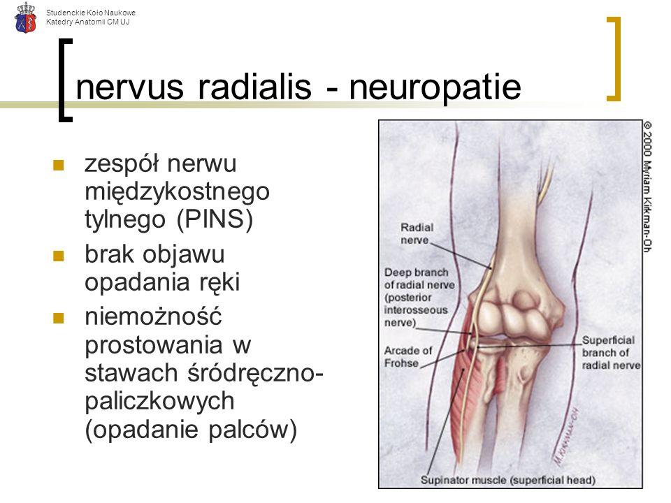 nervus radialis - neuropatie