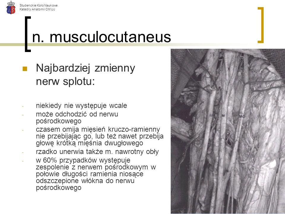 n. musculocutaneus Najbardziej zmienny nerw splotu: