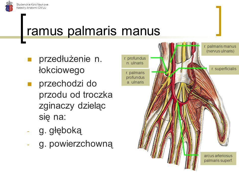 arcus arteriosus palmaris superf.