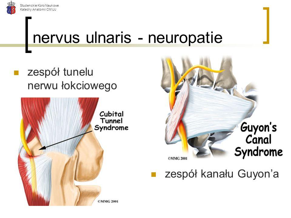 nervus ulnaris - neuropatie