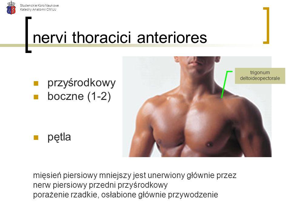 nervi thoracici anteriores