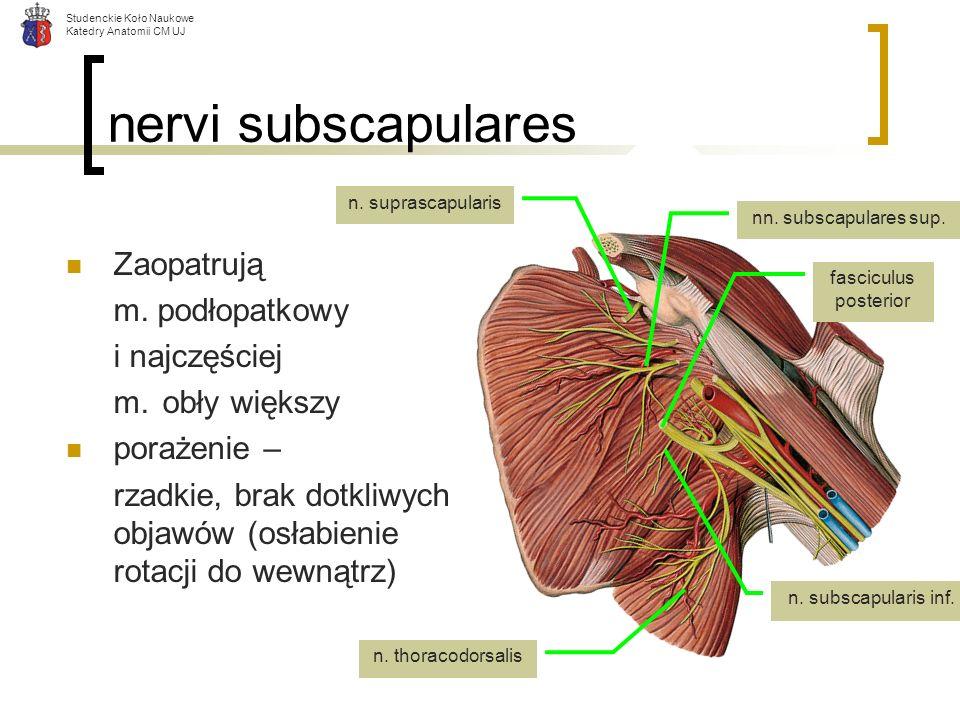 nervi subscapulares Zaopatrują m. podłopatkowy i najczęściej