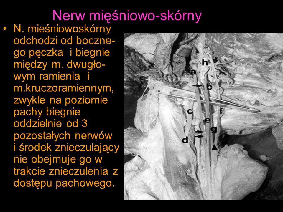 Nerw mięśniowo-skórny