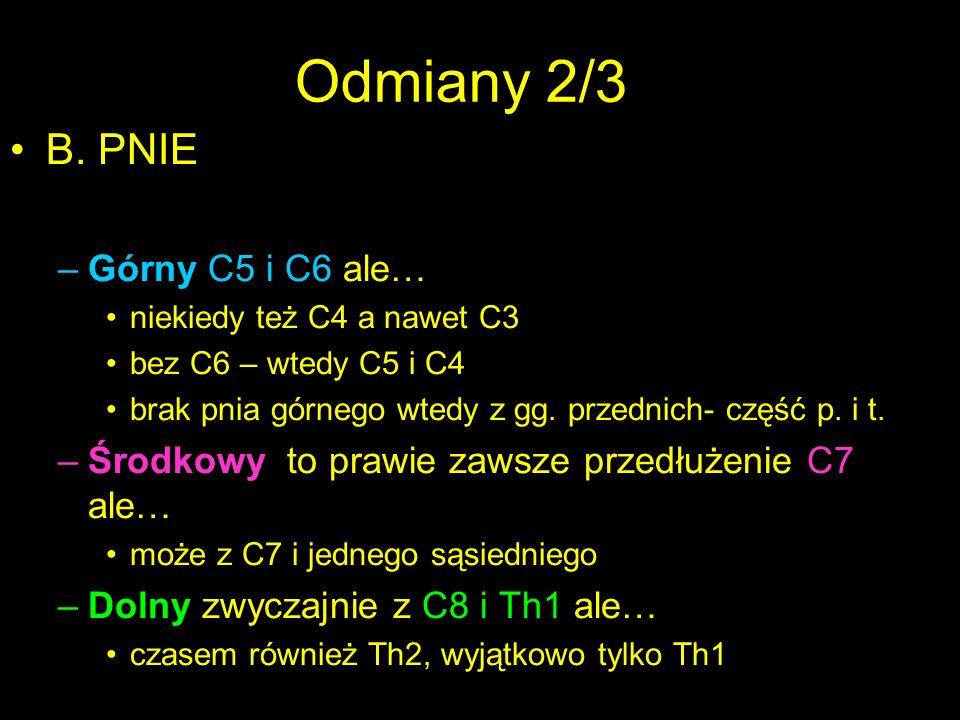 Odmiany 2/3 B. PNIE Górny C5 i C6 ale…