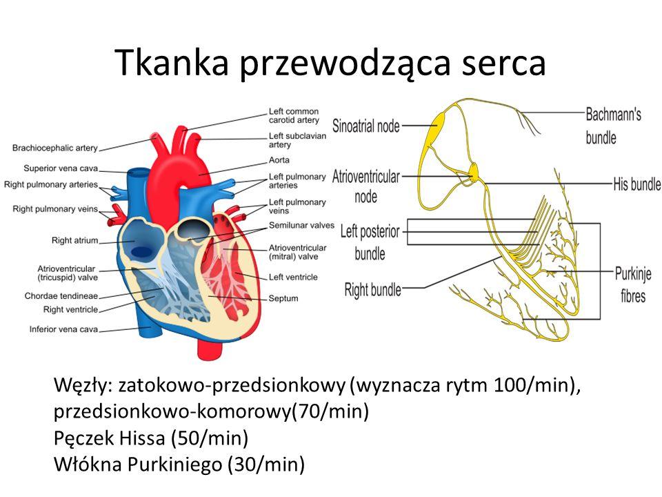 Tkanka przewodząca serca