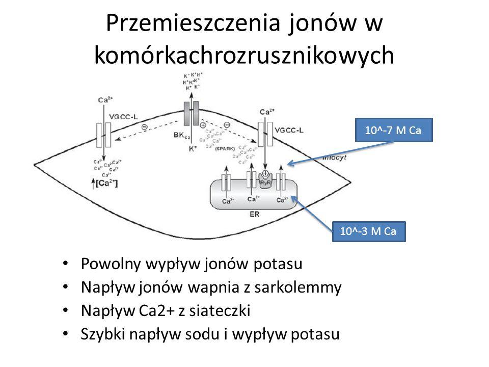 Przemieszczenia jonów w komórkachrozrusznikowych