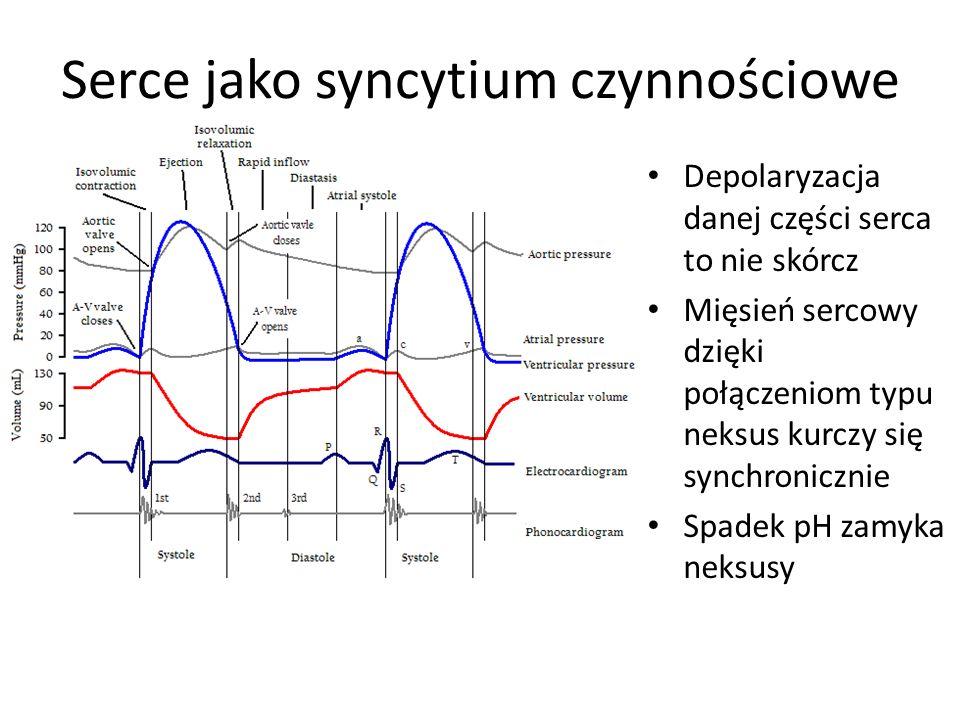 Serce jako syncytium czynnościowe