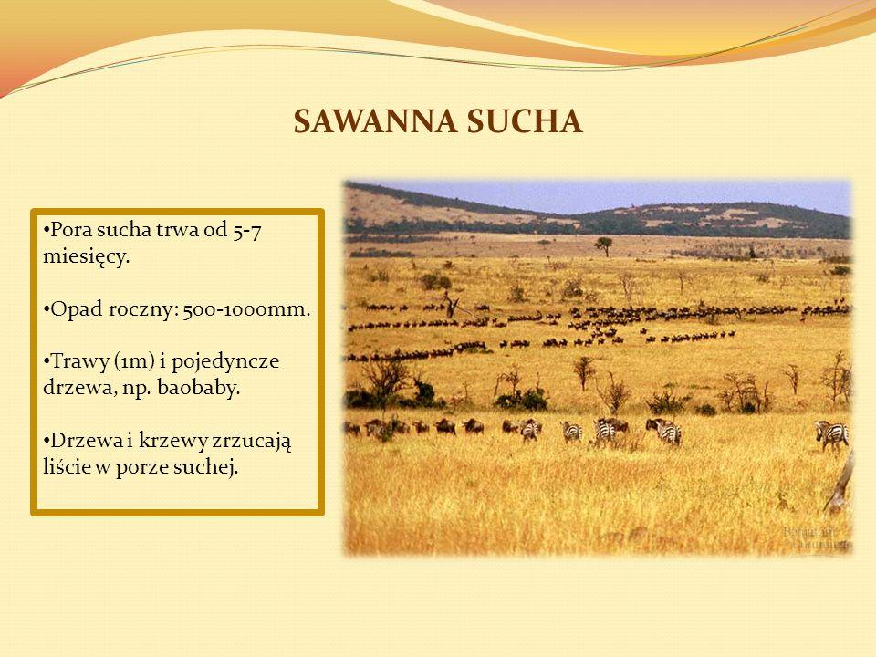 SAWANNA SUCHA Pora sucha trwa od 5-7 miesięcy.