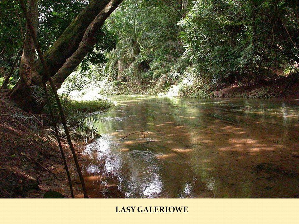 LASY GALERIOWE