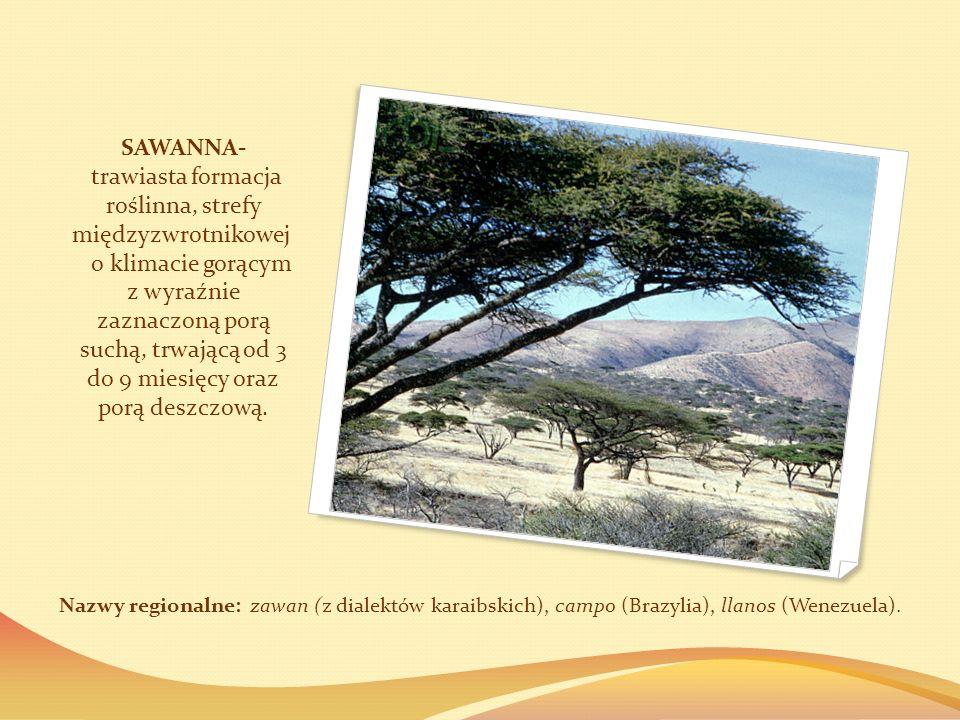 SAWANNA- trawiasta formacja roślinna, strefy międzyzwrotnikowej o klimacie gorącym z wyraźnie zaznaczoną porą suchą, trwającą od 3 do 9 miesięcy oraz porą deszczową.