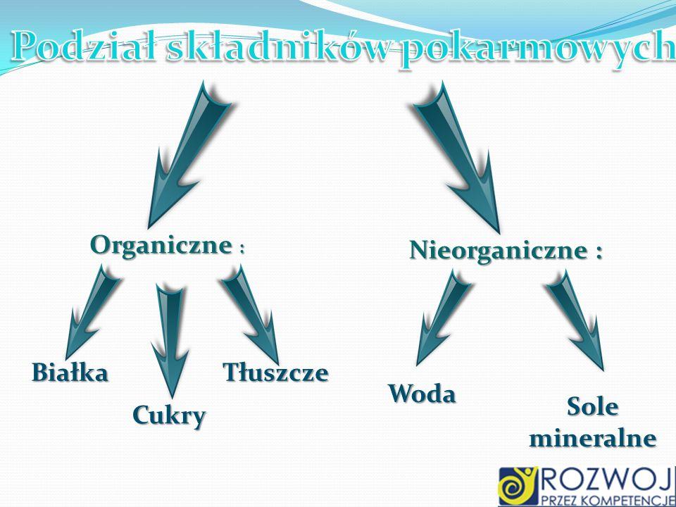 Podział składników pokarmowych