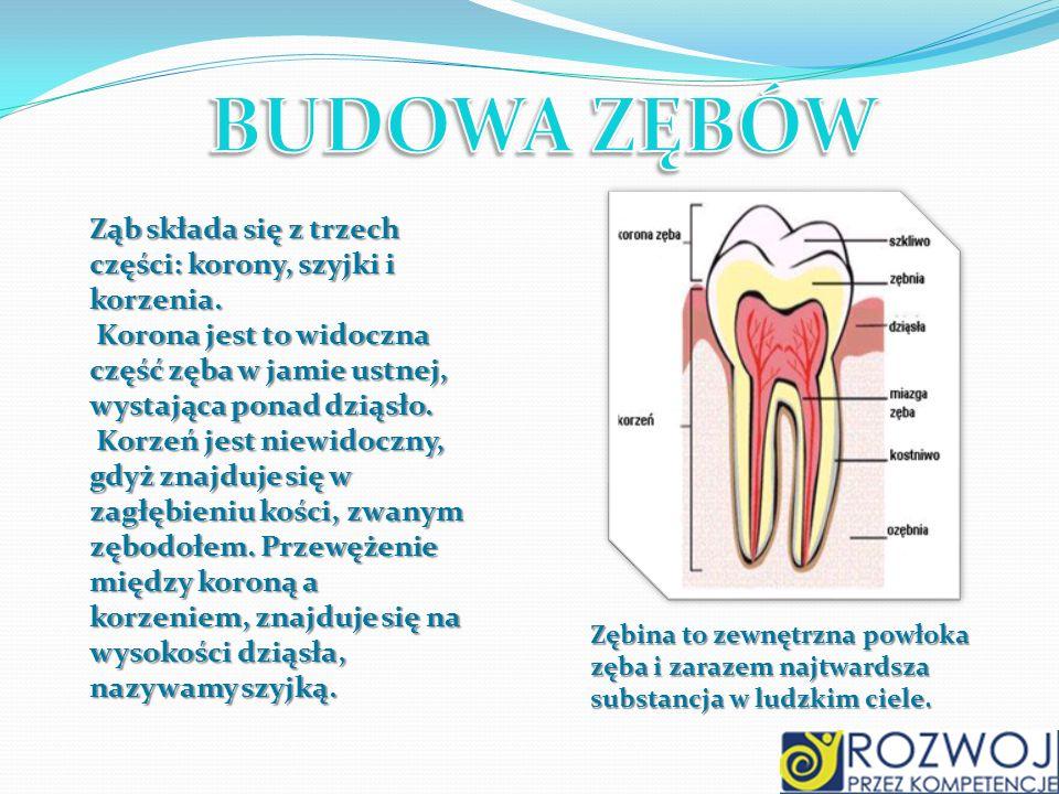 BUDOWA ZĘBÓW Ząb składa się z trzech części: korony, szyjki i korzenia. Korona jest to widoczna część zęba w jamie ustnej, wystająca ponad dziąsło.