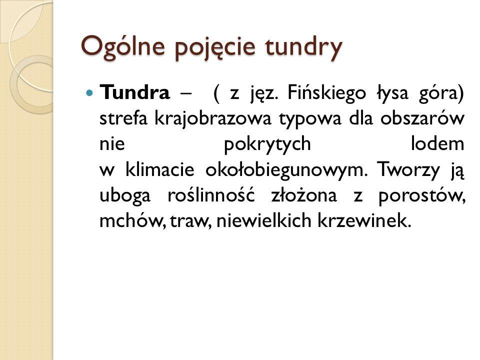 Ogólne pojęcie tundry