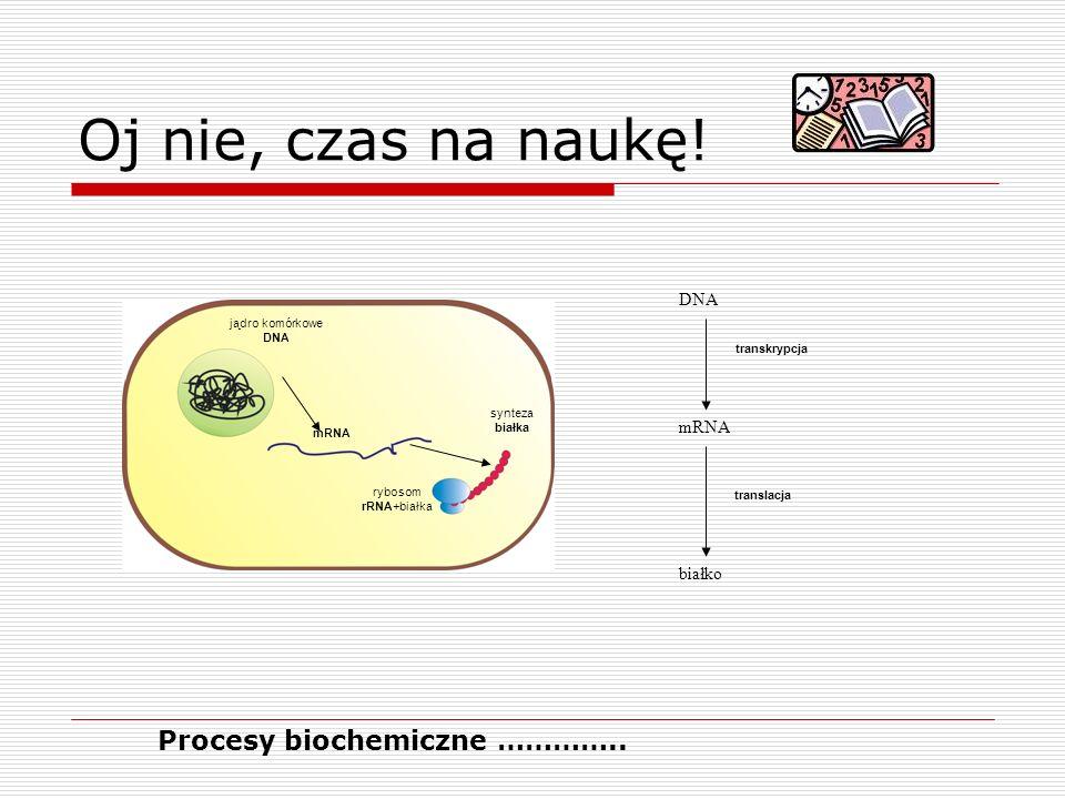 Oj nie, czas na naukę! Procesy biochemiczne ………….. białko