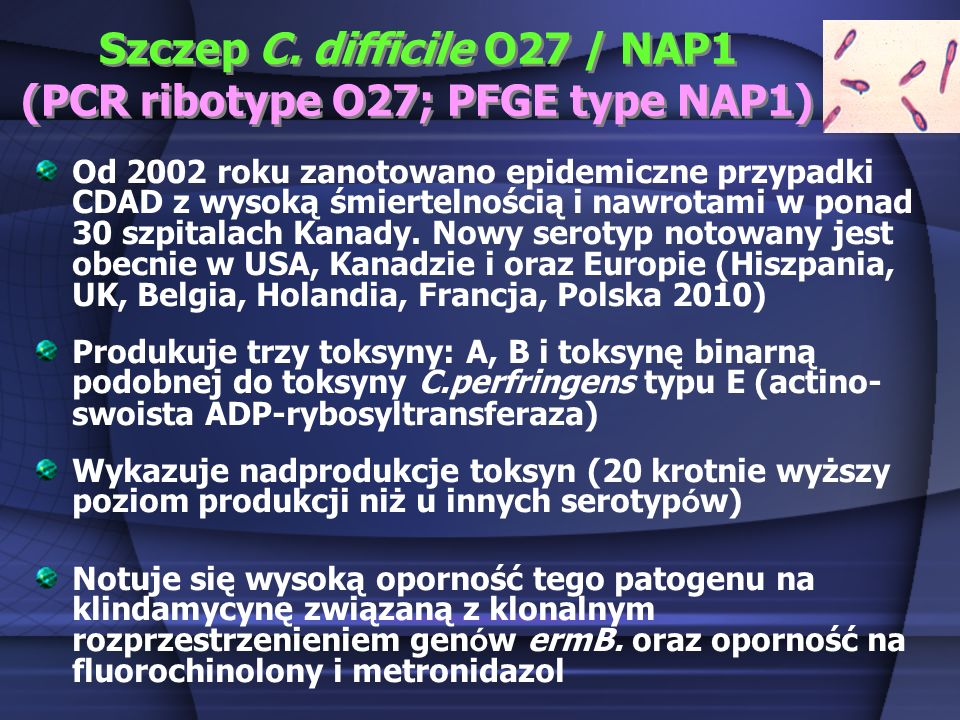 Szczep C. difficile O27 / NAP1 (PCR ribotype O27; PFGE type NAP1)