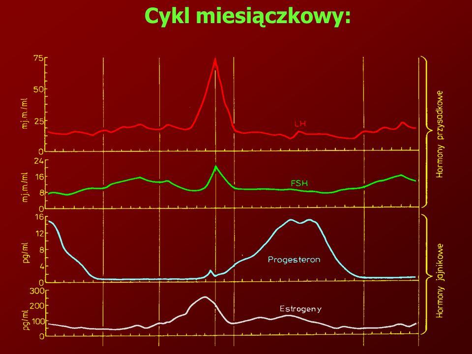 Cykl miesiączkowy: