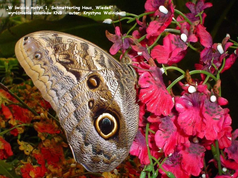 """""""W świecie motyli 1, Schmetterling Haus, Wiedeń"""