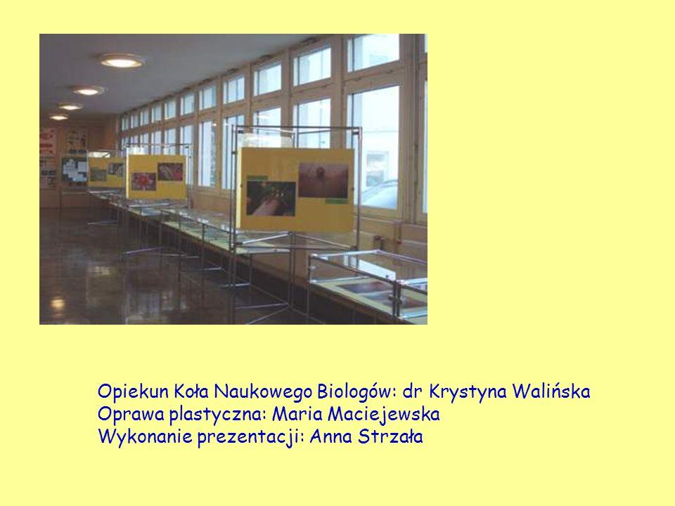 Opiekun Koła Naukowego Biologów: dr Krystyna Walińska