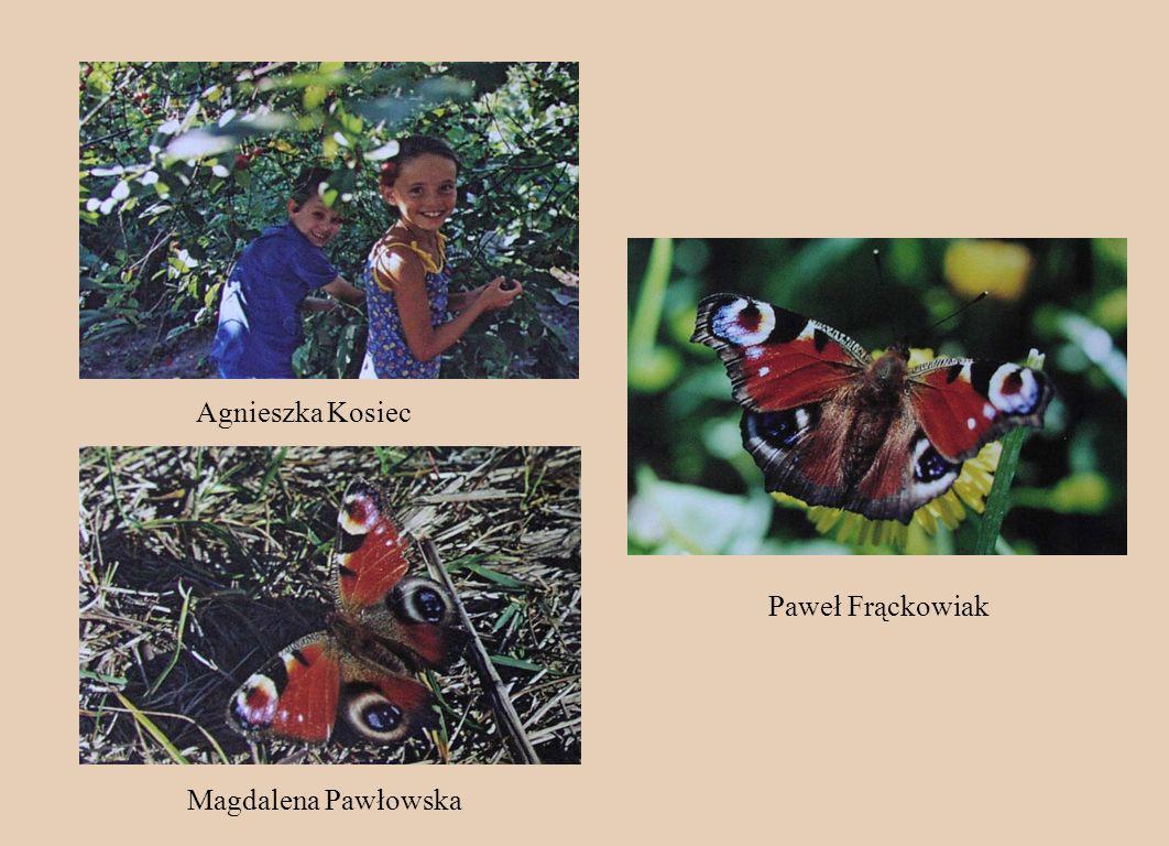 Agnieszka Kosiec Paweł Frąckowiak Magdalena Pawłowska