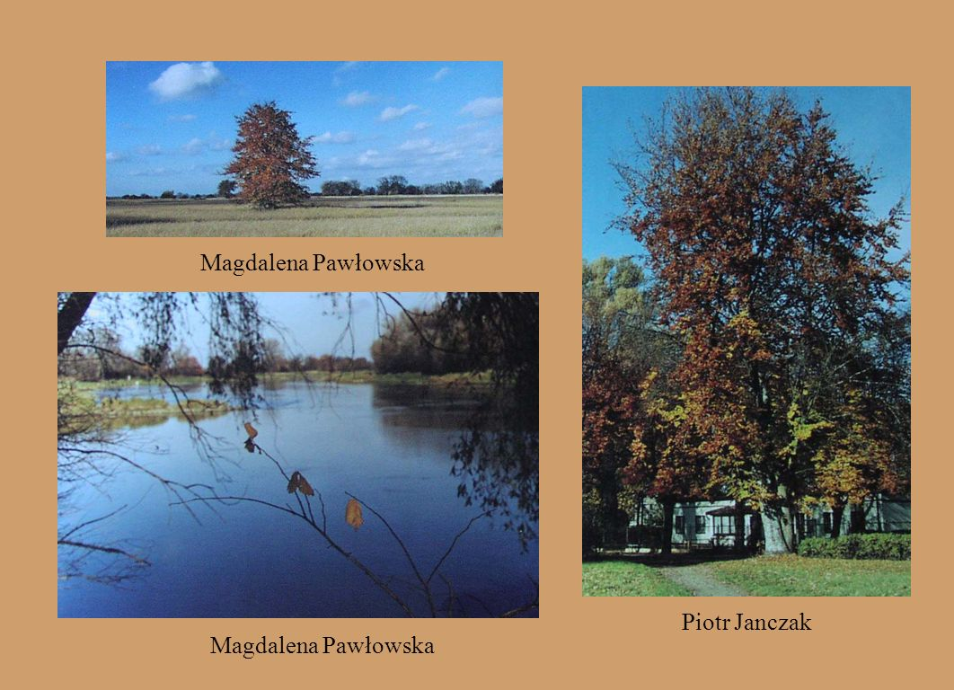 Magdalena Pawłowska Piotr Janczak Magdalena Pawłowska
