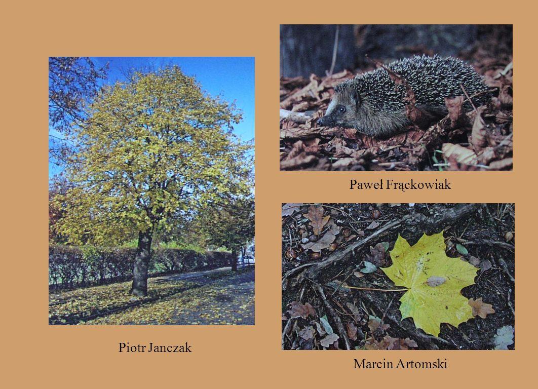 Paweł Frąckowiak Piotr Janczak Marcin Artomski
