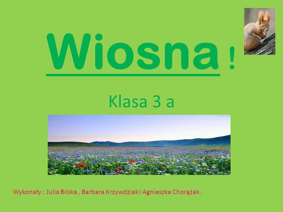 Wiosna ! Klasa 3 a Wykonały : Julia Bilska , Barbara Krzywdziak i Agnieszka Chorążak .